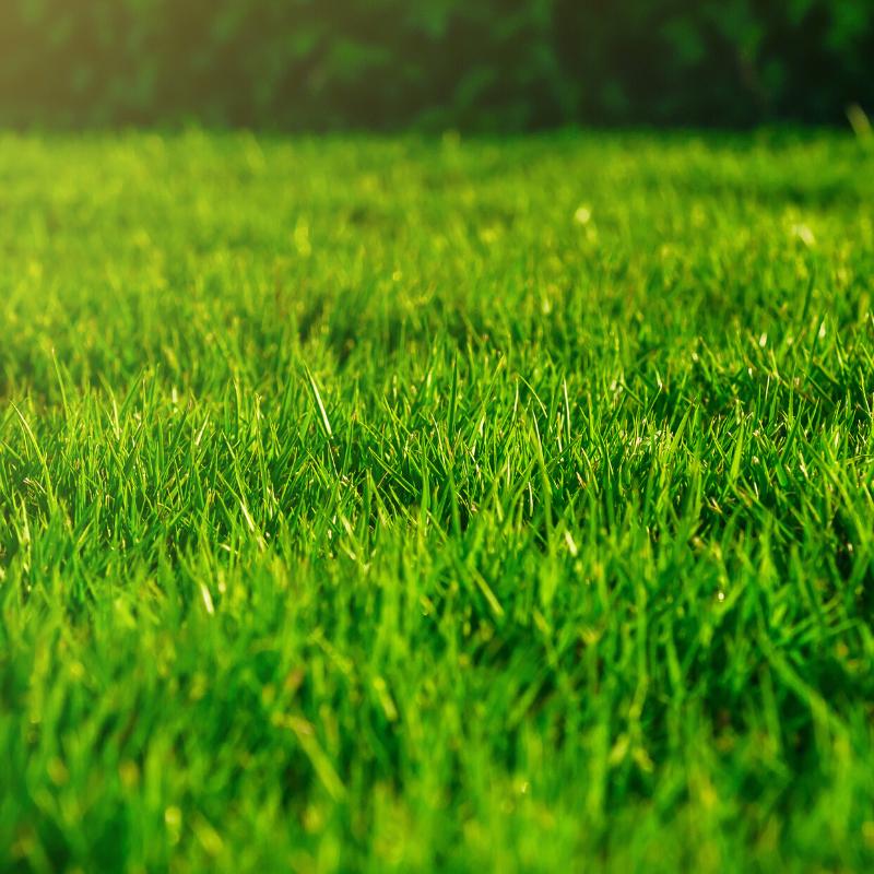 Healthy, green lawn