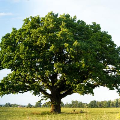 a tree in a field