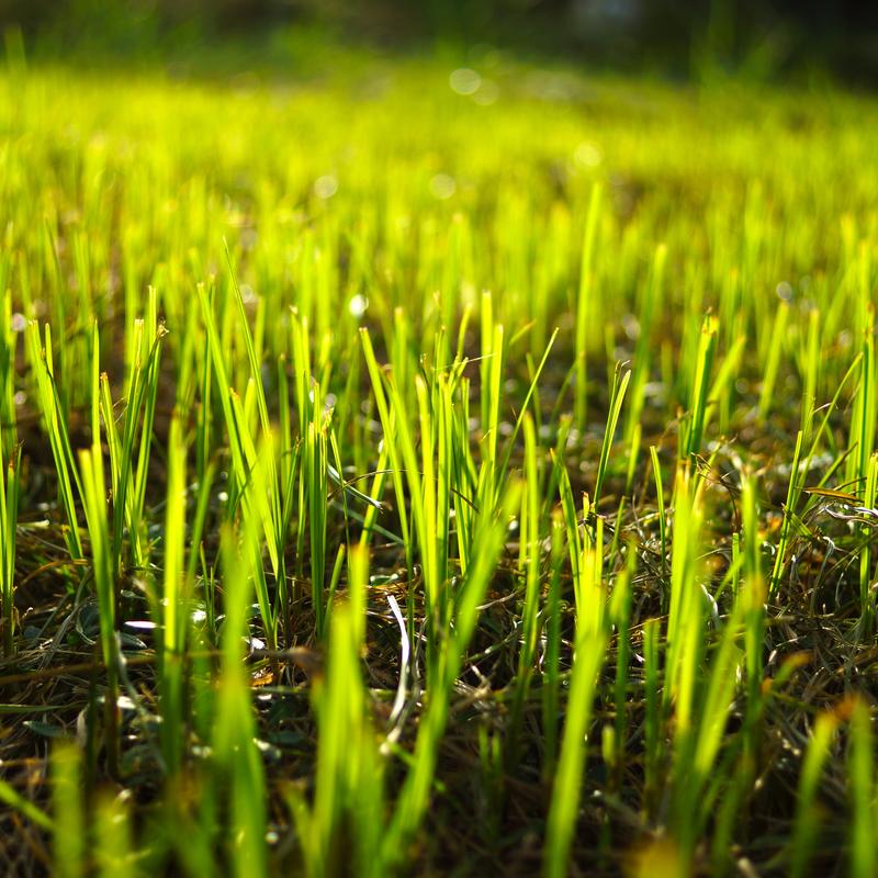 new grass growth